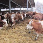 Agrarpolitischer Sprecher der Landtagsfaktion von Bündnis 90/Die Grünen besucht URIA-Projekt