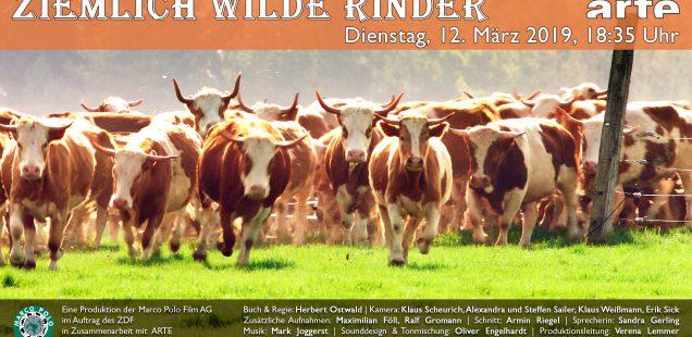 """12.März 2019, arte """"ziemlich wilde Rinder"""""""